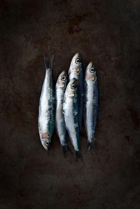 Très belle photo de sardines, par My Little Fabric http://www.mylittlefabric.com/les-sardines/