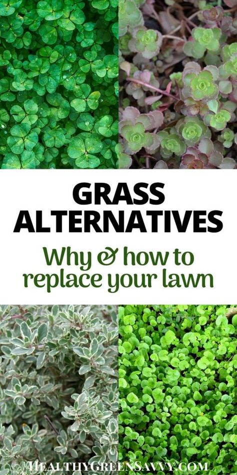 Grass Alternatives: Why & How to Replace Your Lawn Grass alternatives can save you money, time, and water, while reducing greenhouse gas emissions. Find out how easy it is to convert some of your lawn to grass alternatives! Permaculture, Grass Photoshop, Clover Lawn, Moss Lawn, Grass Background, Growing Grass, Ground Cover Plants, Ornamental Grasses, Lawn And Garden