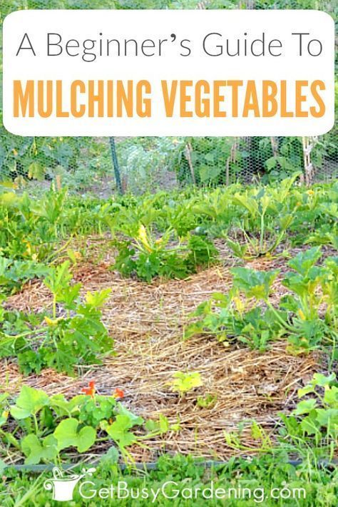 Get Tips For Mulching A Vegetable Garden Including The Benefits Of Mulching Vegetables When To Mulch And W Mulching Types Of Mulch Backyard Vegetable Gardens