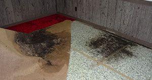 Mold Under Carpet Clean Black Mold Carpet Rugs On Carpet