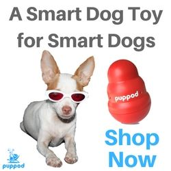 10 Tips For Traveling With A Chihuahua By Car Smart Dog Toys