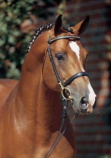 Catoki Stallion Pferdeliebe Pferde Hubsche Pferde