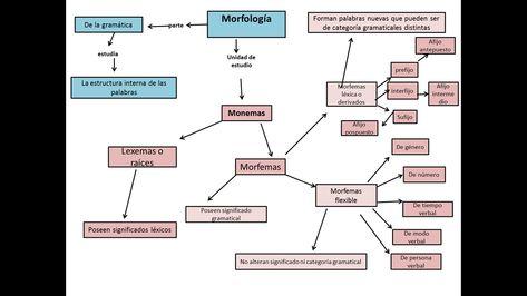 Con La Morfología Aprenderás La Estructura Interna De Las