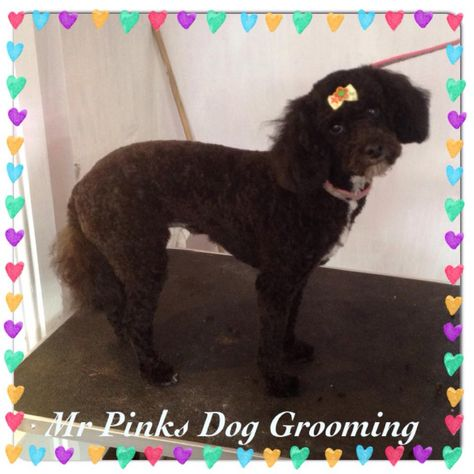 Pin By Mr Pinks Pampered Pets On Mr Pinks Grooming Salon Pink Dog Dog Grooming Dogs
