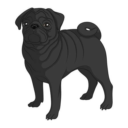 Color Image Of A Black Pug Isolated Vector Object On White Background Black Pug Puppies Black Pug Pugs