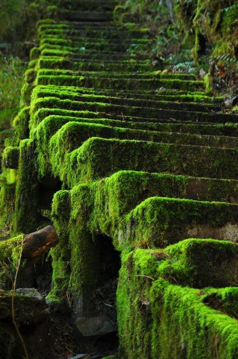 Ideas for landscape architecture nature pathways Abandoned Buildings, Abandoned Places, Take The Stairs, Stairway To Heaven, Jolie Photo, Pathways, Stairways, Beautiful Places, Romantic Places