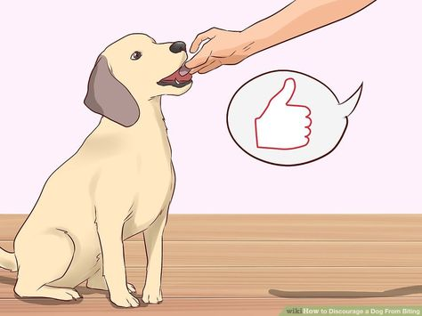 On Discouraging Your Dog From Chewing