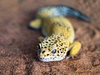 Pin On Gecko Names