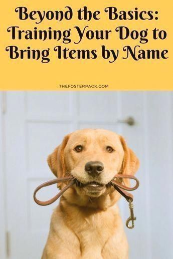 Sentimental Counseled Dog Training Commands You Can Try This Out