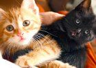 #kittens #animals #cat #photos #pictures #freewallpapers #freebies