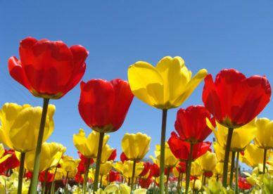 خلفيات صور ورود حب جديدة وأحلى ورود رومانسية للحبيب 2018 عالم الصور Spring Flowers Background Spring Flowers Wallpaper Spring Wallpaper Hd
