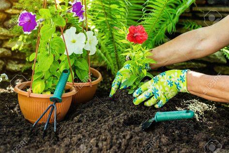 Gardening tools in the garden. Gardeners hand planting flowers
