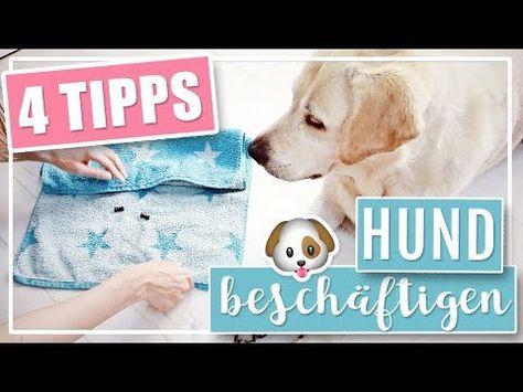 4 Coole Diy Ideen Hund Drinnen Beschaftigen Youtube Hunde Hunde Hund Beschaftigen Und Hundebedarf