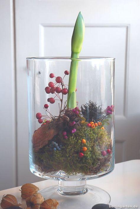 Amaryllis-Gestecke - einfacher geht's nicht. Bloß nicht gießen, sondern hübsch in Glas mit Zweigen oder Beeren anrichten. berlingarten, das Gartenblog