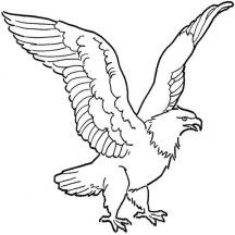 Soaring Bald Eagle Drawing Coloring Page Eagle Drawing Eagle