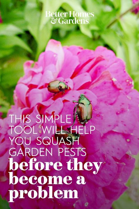 When you have a garden, you'll likely also have to contend with hungry bugs that want to nibble your prized flowers or move into your lettuce patch. But now you could have a secret weapon to help deal with them, thanks to The Big Bug Hunt. #gardenpests #getridofgardenpests #gardenprotection #gardenbugs #bhg