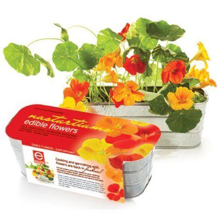 Amazon.com: Organic Edible Flower Kit - Nasturtiums: Patio, Lawn & Garden