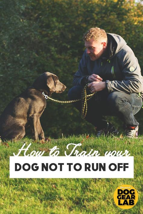 How to Train Your Dog Not to Run Off