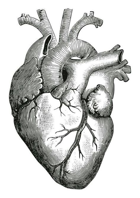 Diagram of a human heart for kids tattoo pinterest human heart diagram of a human heart for kids tattoo pinterest human heart diagram and tattoo ccuart Images