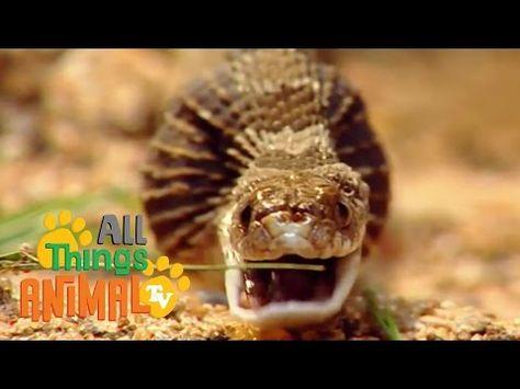 SNAKES | Animals for children. Kids videos. Kindergarten. Preschool learning - YouTube