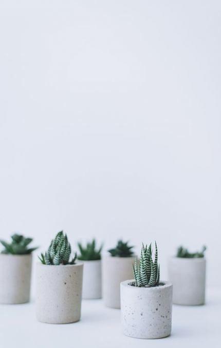29 Ideas For Cute Succulent Pots Concrete Planters Succulent Succulent Planter Diy Succulent Planter Succulent Garden Diy