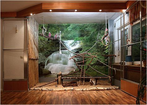 Good idea for a Macaw/African Gray habitat, like the picture in the background to feel more natural for the birds