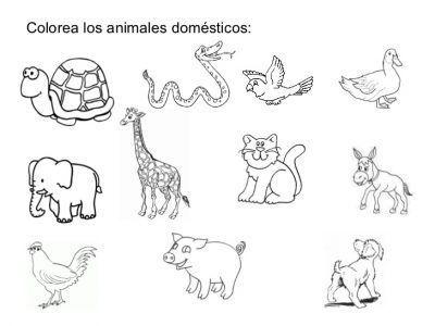 Dibujos Para Colorear De Animales Domesticos Y Salvajes Actividades De Los Animales Animal Domestico Animales Salvajes Para Ninos