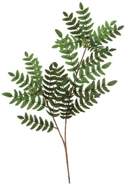 27 Acacia Leaf Branch 152 Leaves Green Fire Retardant
