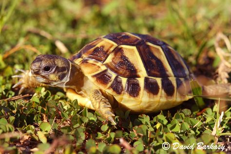 Isn't this just the cutest 'lil tortoise you ever saw? ^_^