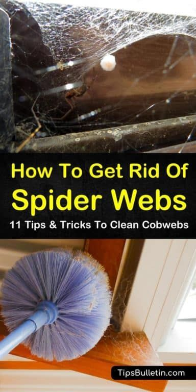 368bbf826cdfb4de2f39236fccd952ae - How To Get Rid Of Spider Webs On Grass