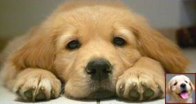 House Training A Puppy In 5 Days And Dog Training Courses In Sri