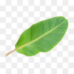 Banana Leaf Png Picture Banana Clipart In Kind Banana Leaves Png Transparent Clipart Image And Psd File For Free Download Banana Leaf Clip Art Png