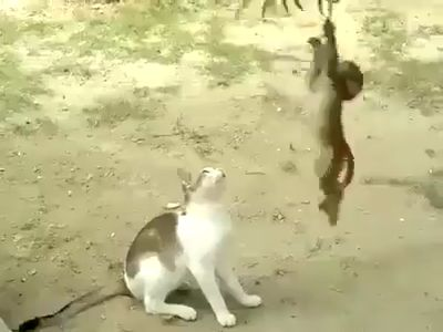 Watch until the end .This is about a big big love ! untirable playful baby monkey and a wonderful playful and loving mama cat like #crazycat
