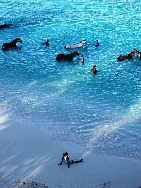 Barbados: Wake up early and go watch the horses swim