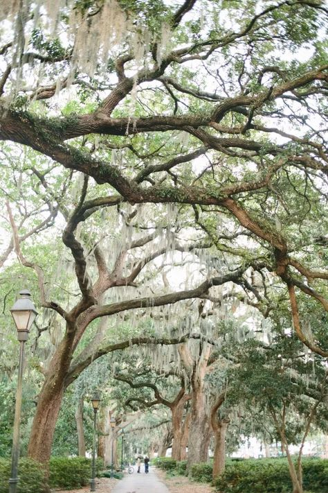 If trees dripping in Spanish moss, historic architecture, and southern cuisine tickle your fancy then you will love Savannah, Georgia. Savannah Georgia Travel, Visit Savannah, Savannah Chat, Atlanta Travel, Historic Savannah, Downtown Savannah, The Places Youll Go, Places To See, Forsyth Park