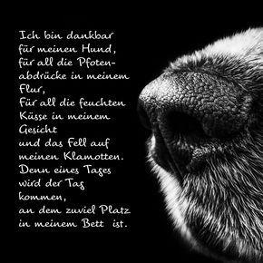 Ich Bin Dankbar Trauergedicht Anubis Tierbestattungen Zitate Tiere Hundespruche Spruche Tiere