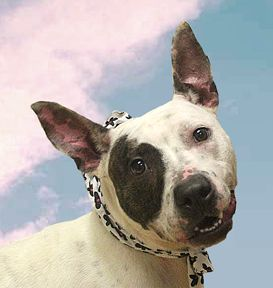 Adopt Stacy On Animal Rescue Cute Animals Dogs