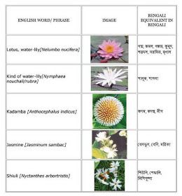English Bengali Grammar Flowers English To Bangla Meaning Daisy Flower Meaning Flower Names Flower Meanings