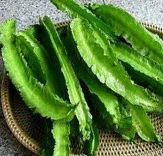 This unusual bean is a staple throughout the tropics. All parts of the plant are…