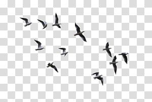Bird Flight Gulls Flying Bird Low Angle View Of Flying Birds Transparent Background Png Clipart Flying Birds Wall Art Birds Flying Bird Wall Art