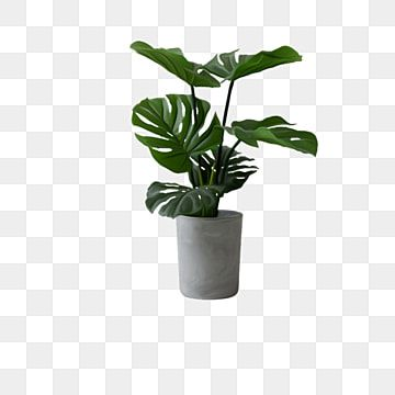 Potted Plants Plant Clipart Green Plant Plant Png Transparent Clipart Image And Psd File For Free Download In 2021 Plant Images Plants Indoor Green Plants