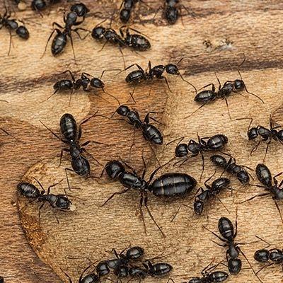 Having A Snack Buffalo Buffalony Bedbugs Pestcontrol Pestremoval Bed Bugs Bed Bug Bites Bed Bugs Treatment