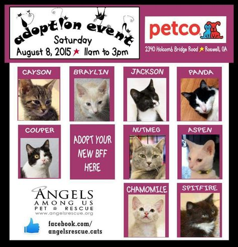 Petco Cat Adoptions With Images Cat Adoption Petco Cat Petco