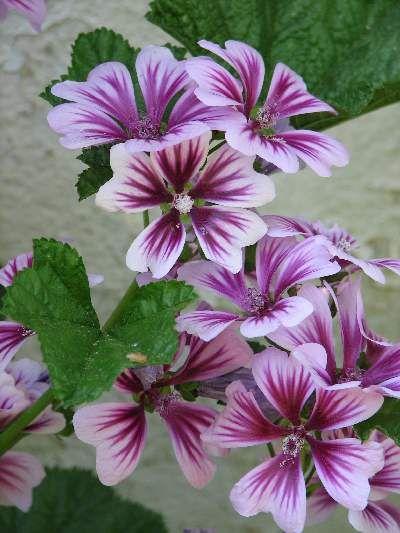 Pin On Kwiaty I Rosliny W Ogrodzie