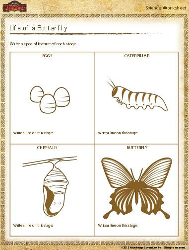 Butterfly Life Cycle Worksheet Download Education World With