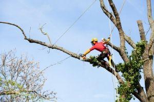 Tree Cutting Atlanta GA