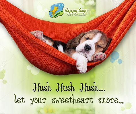 Did You Know Sound Sleep Gives Your Pet Buddy Great Enthusiasm Happysleepday Dog Wash Your Pet Sound Sleep