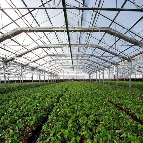 Commercial greenhouse 25 pinterest commercial greenhouse 25 pinterest mozeypictures Image collections