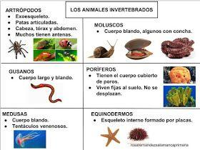 Maestra De Primaria El Reino Animal Y El Reino De Las Plantas Esquemas De Naturales Adapta Vertebrados E Invertebrados Reino Animal Estandares De Aprendizaje