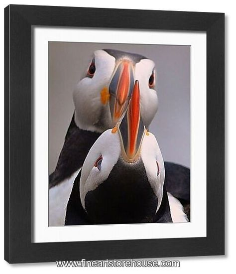 Print of Puffin in love